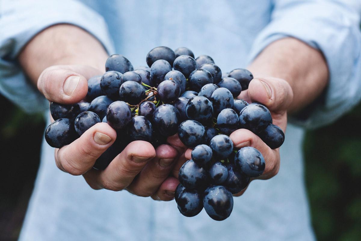 Erlebnisführung am Weingut Grasmuck