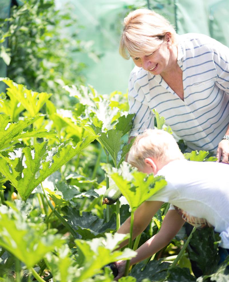 Gemüse ernten im Garten