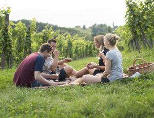 Picknick im Weingarten in der Südsteiermark