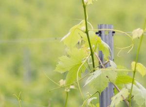 Wein Erlebnisführung am Weingut Grasmuck