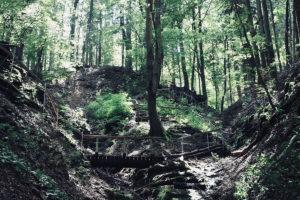 Naturjuwel Altenbachklamm nähe Oberhaag in der Steiermark; © DJ3tausend/Wikimedia Commons
