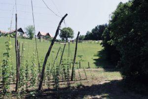 06_remschniggalm